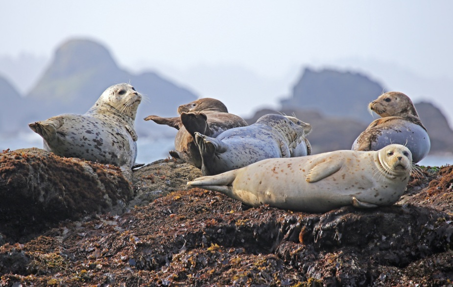 seals-resting-rock-ocean.jpg