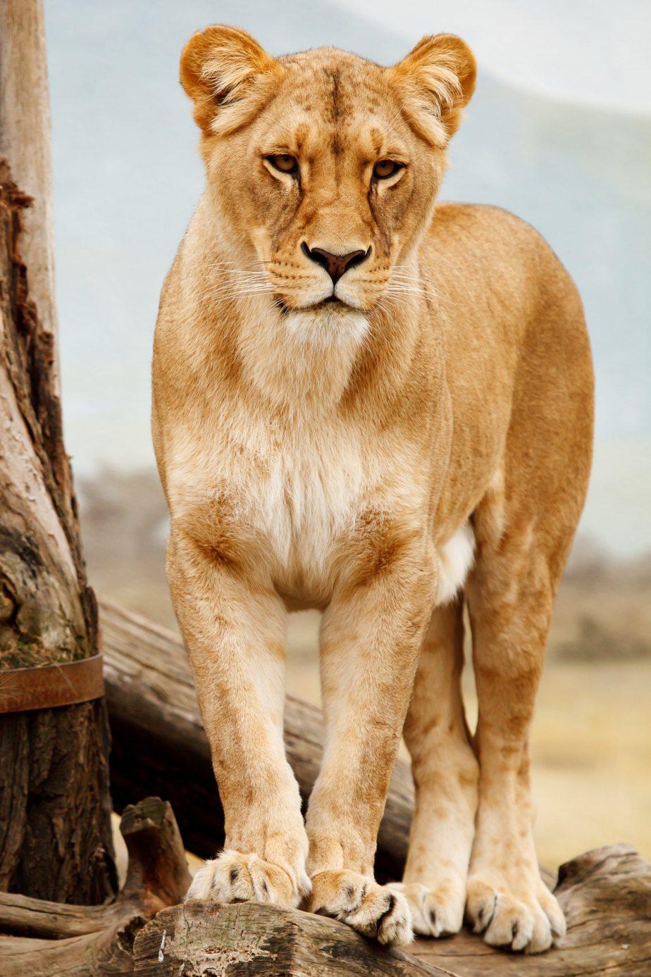 africa-african-animal-41314.jpg
